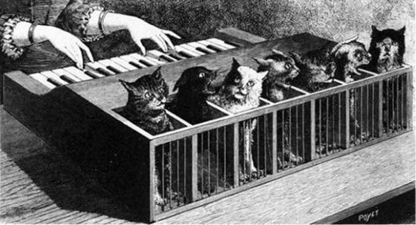 kass-klaver
